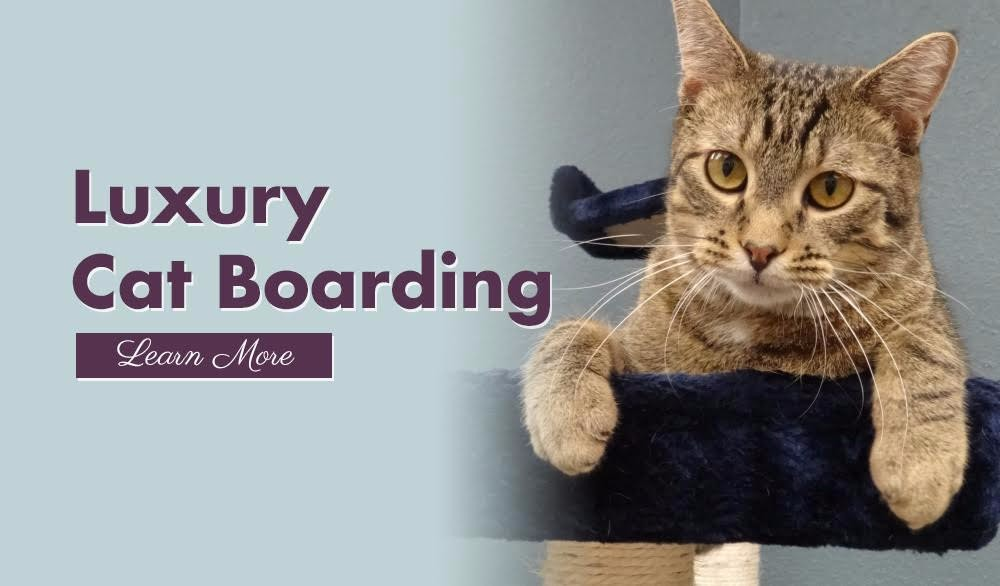 Cat boarding | Four Paws Pet Hotel