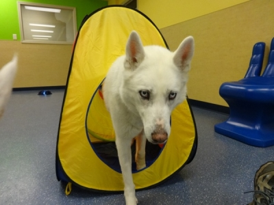 doggie daycare, Fort Collins