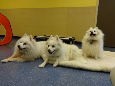Doggie Daycare Fort Collins