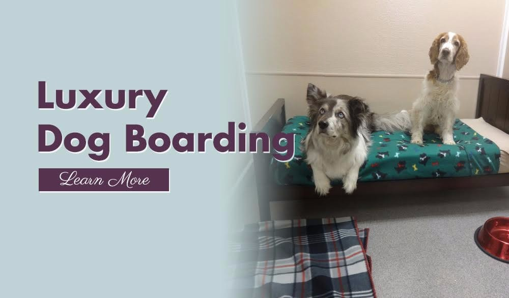 Four paws pet hotel resort boarding daycare fort for 4 paws dog salon