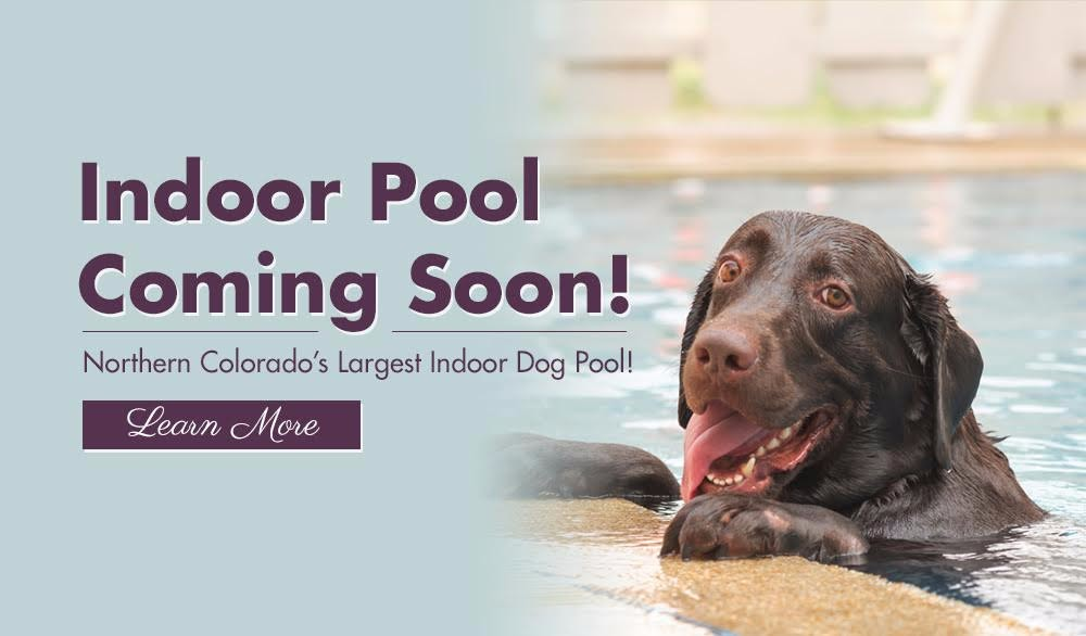 indoor dog pool | Four Paws Pet Hotel
