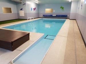 Indoor Pool - Four Paws Pet Hotel & Resort